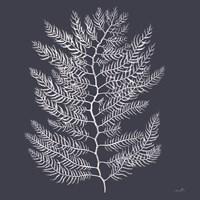 Sea Moss III Framed Print