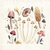 Fungi Field Trip II Fine Art Print