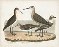 Waterbird Trio II Framed Print