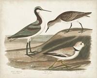 Waterbird Trio III Framed Print