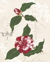 Dianne's Camelias I Fine Art Print