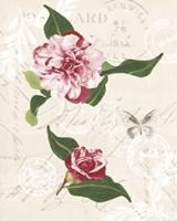 Dianne's Camelias II Fine Art Print