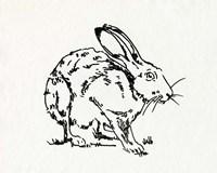 Resting Hare II Fine Art Print