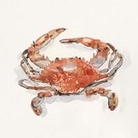 Crusty Crab II Fine Art Print