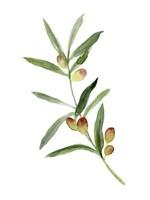 Sweet Olive Branch I Framed Print