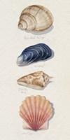 Shore Things II Framed Print