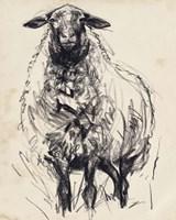 Charcoal Sheep I Framed Print