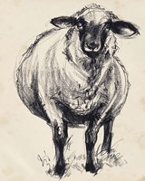 Charcoal Sheep II Framed Print