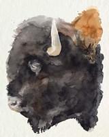 Watercolor Bison Profile II Framed Print