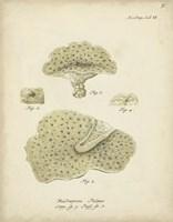 Ecru Coral I Framed Print