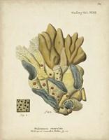 Ecru Coral III Framed Print