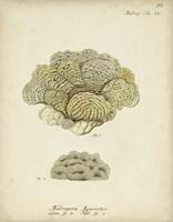 Ecru Coral V Framed Print