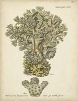 Ecru Coral VI Framed Print
