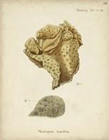 Ecru Coral VII Fine Art Print