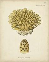 Ecru Coral VIII Fine Art Print