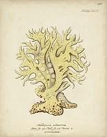 Ecru Coral IX Fine Art Print