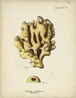 Ecru Coral X Framed Print