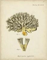 Ecru Coral XI Fine Art Print
