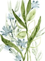 Meadow Blues I Framed Print