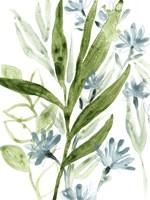 Meadow Blues II Framed Print