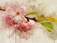 Blossom Elegance I Framed Print