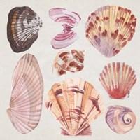 Ocean Sounds III Framed Print