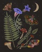 Dark Forest II Framed Print