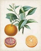 Orange de Malte Framed Print
