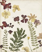 Pressed Flower Arrangement I Fine Art Print