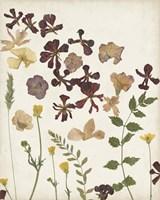 Pressed Flower Arrangement III Fine Art Print