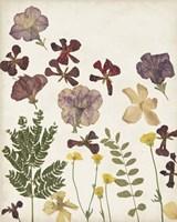 Pressed Flower Arrangement IV Framed Print
