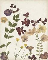 Pressed Flower Arrangement V Fine Art Print