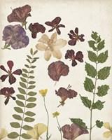Pressed Flower Arrangement VI Framed Print