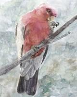 Tropic Parrot I Framed Print