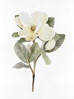 White Blossom VI Framed Print