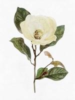 White Blossom VII Framed Print