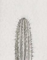 Cactus Study III Framed Print