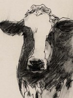 Cow Portrait Sketch II Framed Print