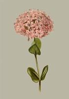 Botanical Array VIII Fine Art Print