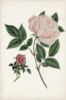Vintage Rose Clippings I Framed Print