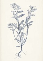 Navy Botanicals II Framed Print