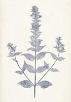 Navy Botanicals VII Framed Print