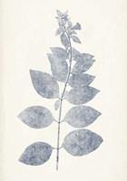 Navy Botanicals IX Framed Print