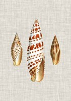 Antique Shells on Linen I Framed Print