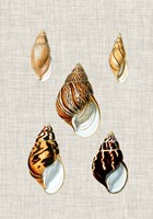 Antique Shells on Linen II Framed Print