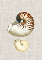 Antique Shells on Linen VII Framed Print