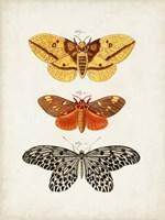 Vintage Butterflies IV Framed Print