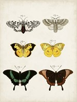 Vintage Butterflies VI Framed Print
