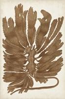 Sepia Seaweed I Framed Print