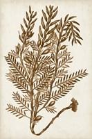 Sepia Seaweed IV Framed Print